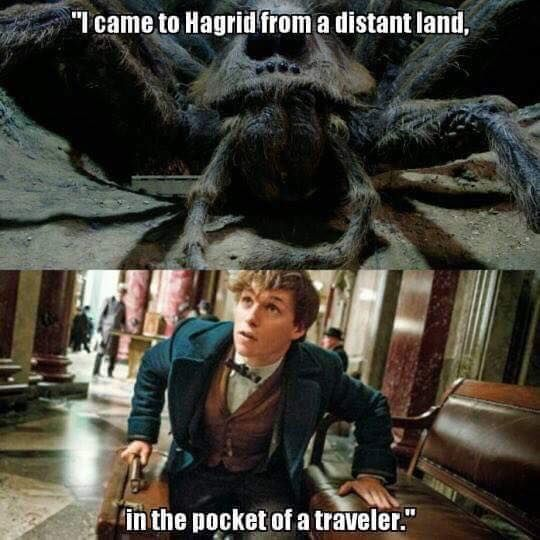 ARAGOG MIGHT'VE BEEN GIVEN TO HAGRID FROM NEWT SCAMANDER
