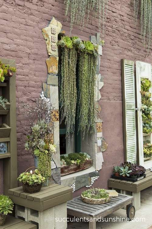 Hanging succulents over a window at the Succulent Cafe in Oceanside - http://www.succulentsandsunshine.com