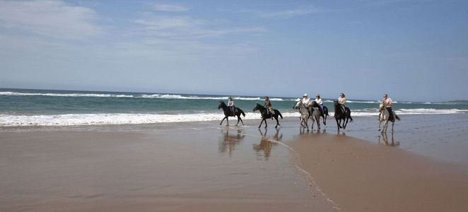 Vast stretches of desolate beaches combine with lush natural beauty to make the Wild Coast a top-notch destination for exhilarating beach-and-bush horseback safaris.