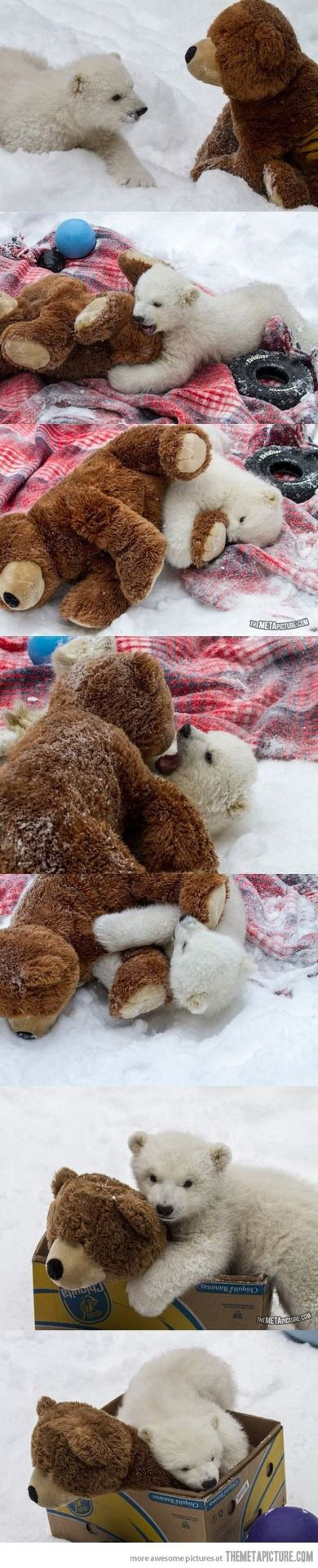 baby polar bear vs. Teddy bear