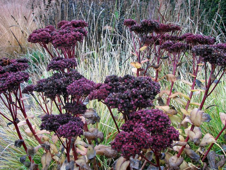 25 best ideas about prairie garden on pinterest garden for Piet oudolf favorite plants