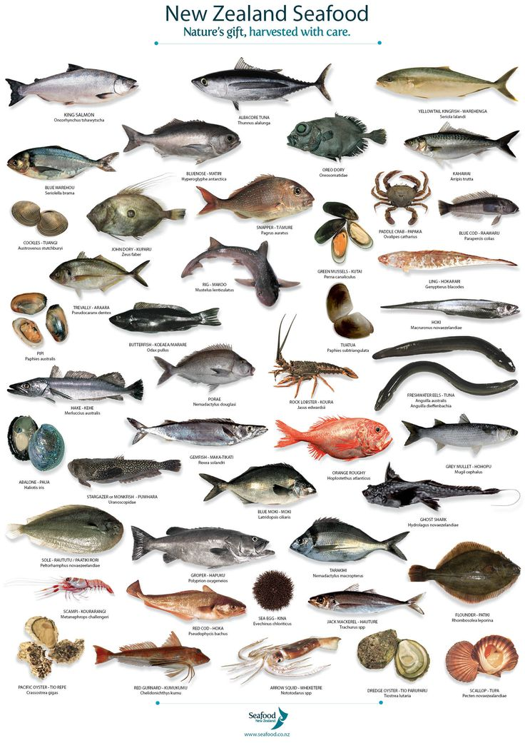 68 best biologa marina images on pinterest nature ocean life fish species tea towel stretch it over a frame use as art in the housekitchen sciox Gallery