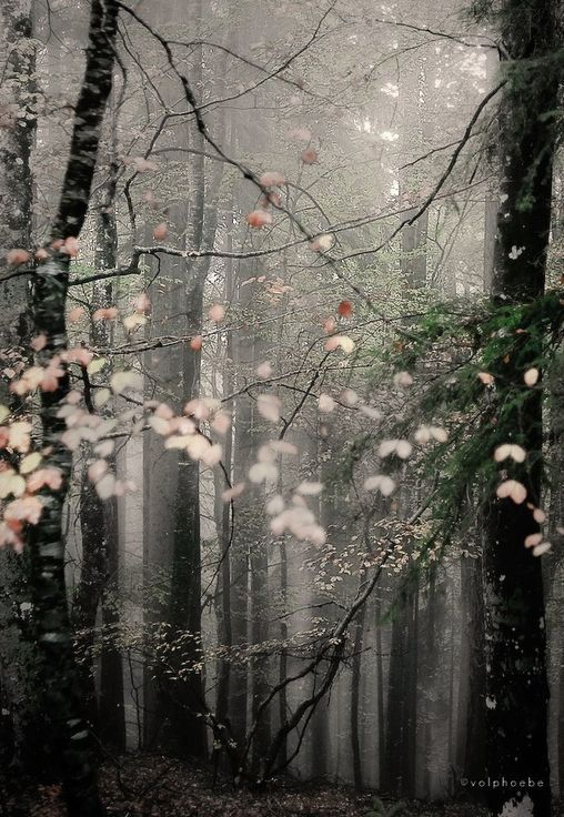 #dream #forest #trees
