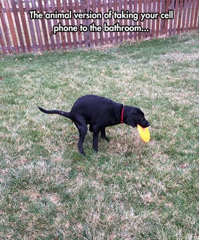 e1a73333944f97b84e38f7eb2145f324 funny dog memes funny dogs 192 best shits & giggles images on pinterest funny photos, funny