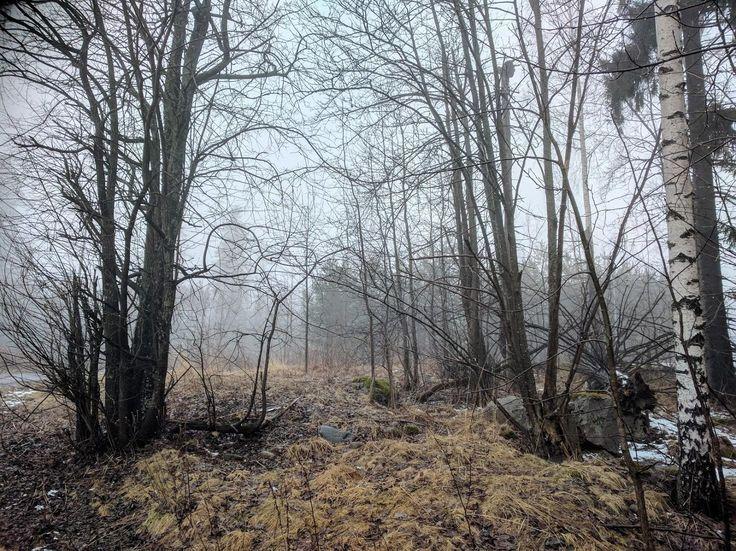 April Mist, Finland [1475×1106] (OC) – #1475×1106 …