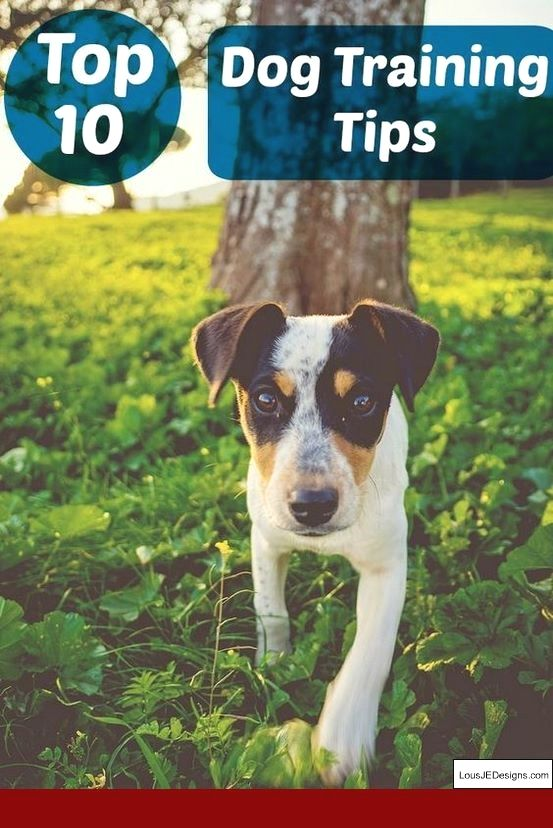 How Do You Train A Small Dog Not To Bark And Pics Of Tips To Train