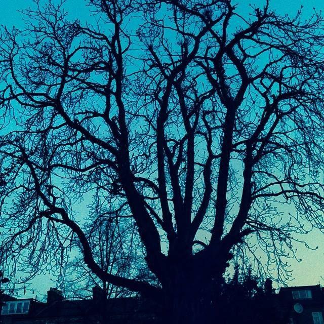 Addicted #treeoflaxmi 06.03.12.3.14