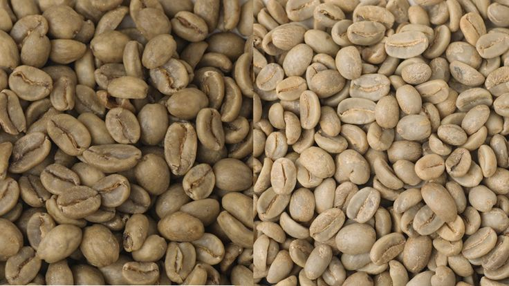 """""""Beverages should only be considered 'caffeine-free' if there was never any caffeine in the ingredients to begin with,"""" she says. """"Coffee and non-herbal teas should not be labeled caffeine-free.""""  So how do you get (almost) all that caffeine out of the coffee, anyway?  The caffeine is removed from green coffee beans, before they are roasted, and there are a number of different processes, all of which affect the roasting process and how long the coffee stays fresh. (Decaf coffee goes stale…"""