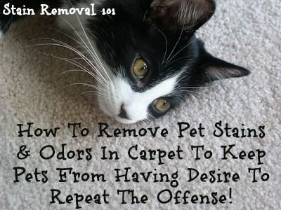 Removing Pet Stains On Carpet: Tips & Tricks#submission_29600046#submission_29600046