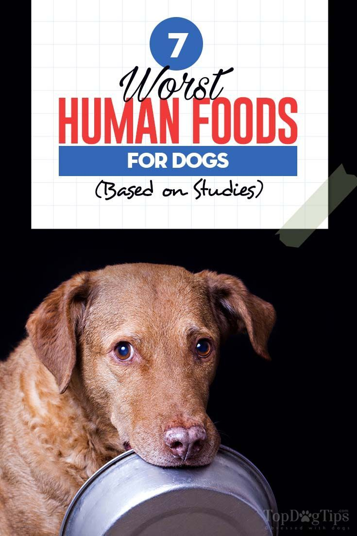 7 human foods dogs cant eat and what happens when they do