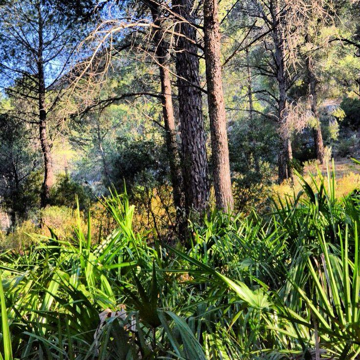 Palmen in het bos bij de meren van Ardales! #bijzonder #avondzon