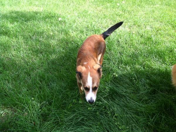 Elegant #COFlood #COPets FOUND DOG: Denver In Park Hill, Call Julie 307