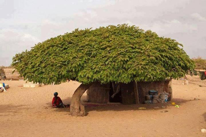Worldwide Collection  Shaded house in the Sahara Desert.