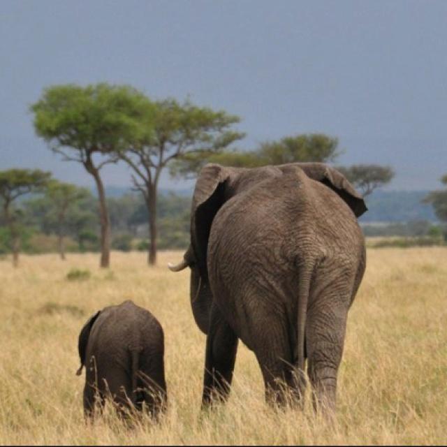 Masai Mara Family