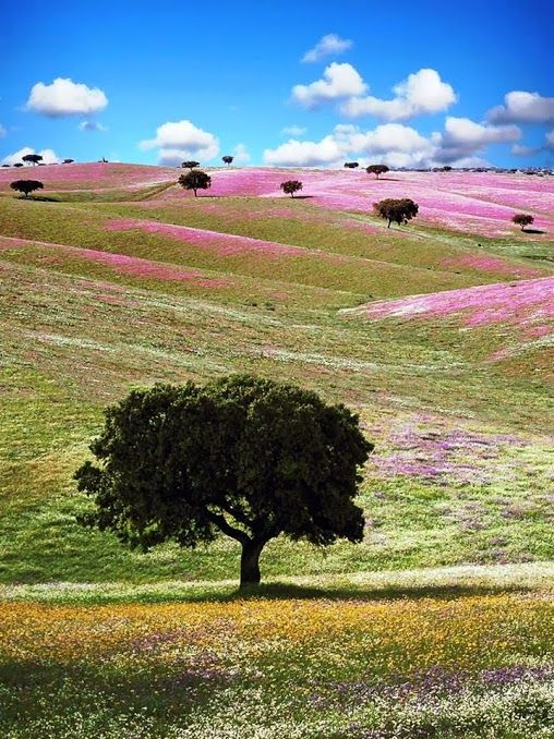 See! Alentejo, Portugal.   Those flowers in the background... that was my auntie's favorite color.  Hmm wonder why?