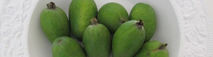 A fabulous blog with loads of feijoa recipes - FEIJOA FEIJOA