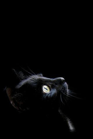 iphone wallpaper pics profile of tiny black kitten on