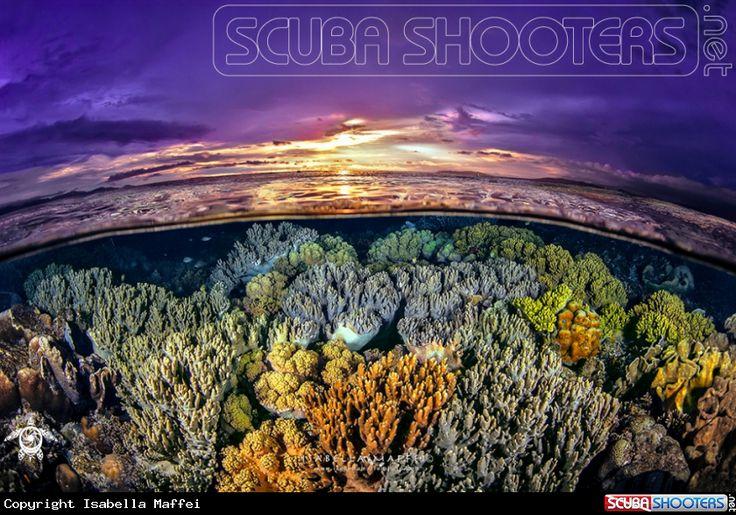 Coral Reef Garden in Raja Ampat - Indonesia