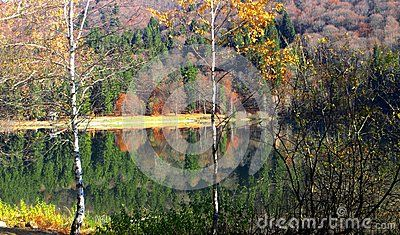 Wonderful autumn colors in the forest at lake Santa Ana in  Romania  reflection in the water