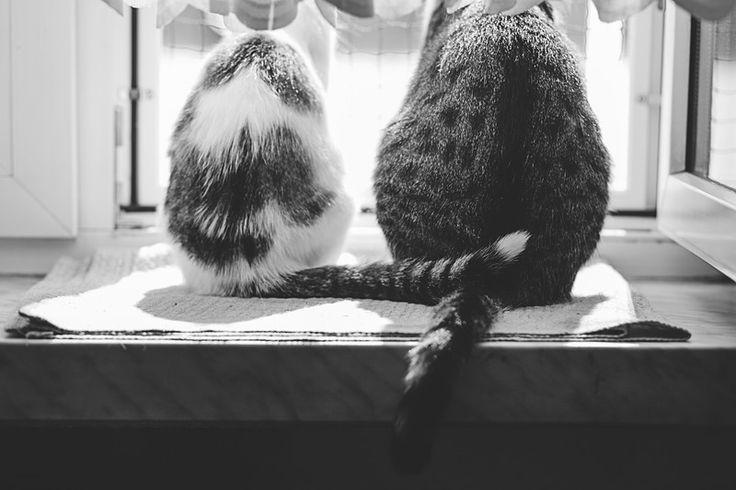Czarno białe zdjęcie kotów- zdjecie na płótnie w Fotografia Monika Małek na DaWanda.com