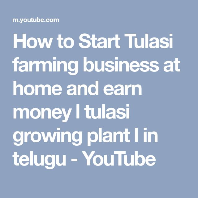 How to Start Tulasi farming business at home and earn money l tulasi growing plant l in telugu - YouTube