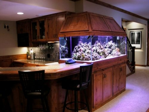 fish tank at the bar, may have to do this downstairs