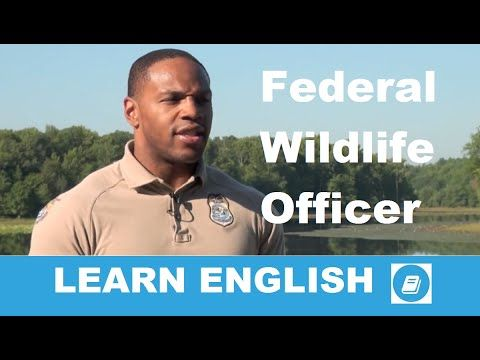 Learn English - Intermediate Listening Test: Wildlife Officer - E-ANGOL