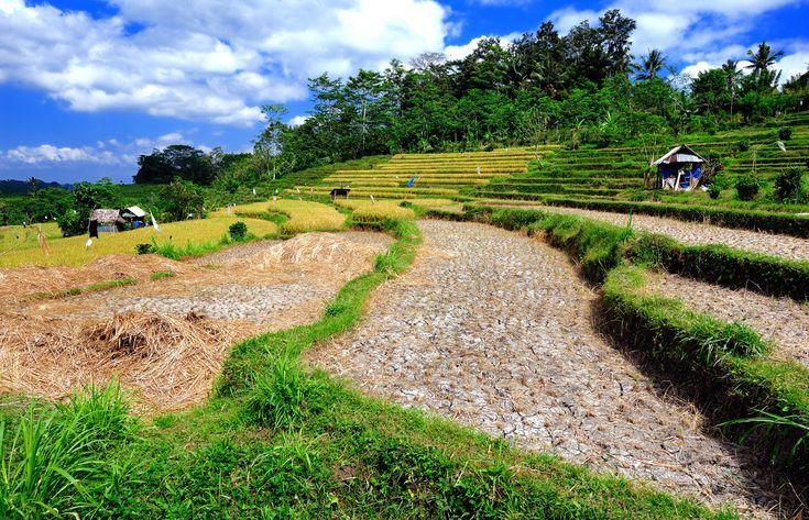 Rizières près de Sidemen #voyageBali, #BaliRizieres, #BaliRizieresEnTerrasse, #BaliCultureDuRiz