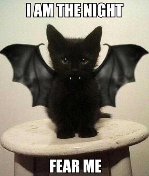 Funny Meme Halloween : Best halloween memes images on pinterest funny
