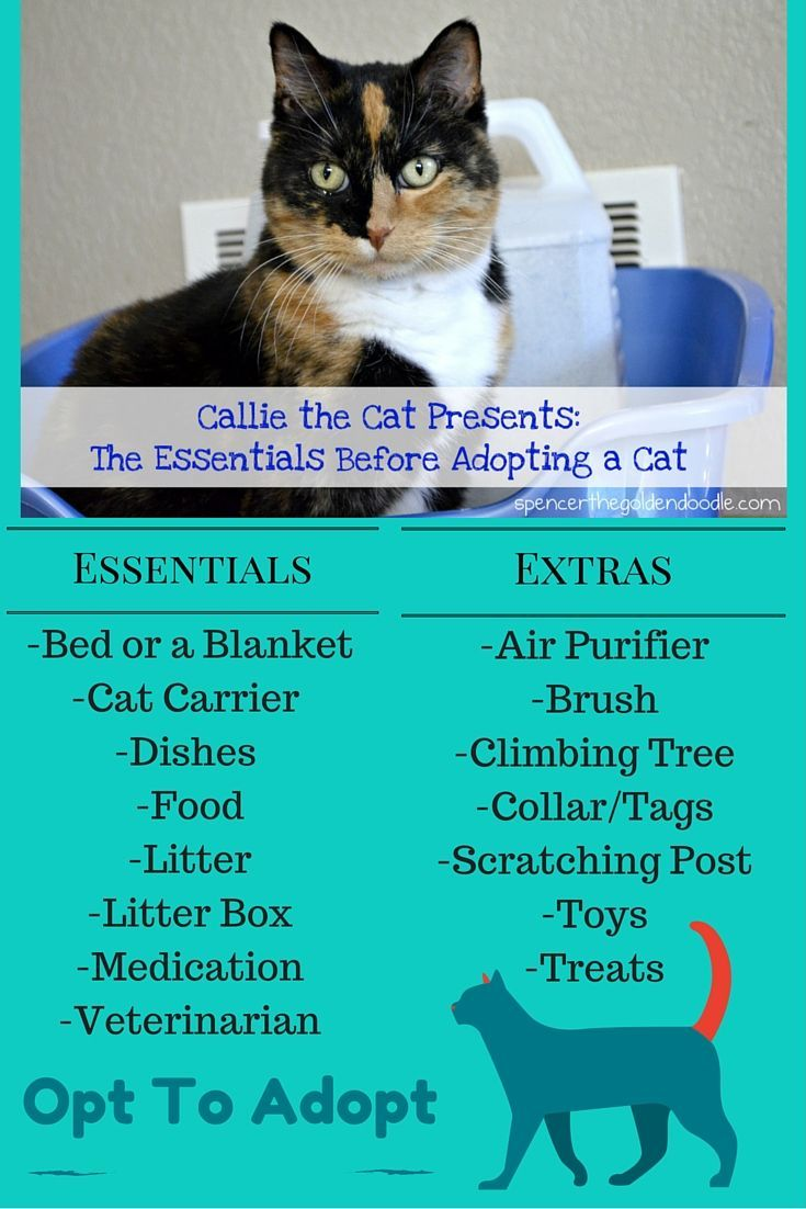 Planning On Adopting A Cat And Don T Know What Essentials You Need Before Bringing Your New Cat Home Here Is A Quick Guil Cat Adoption Cat Care Cat Medication