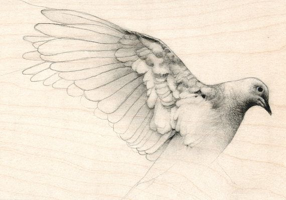 Original Pencil Drawing Bird Dove Sketch by TheHauntedHollowTree, $175.00