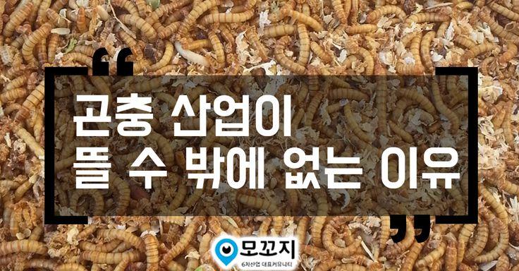 고단백 슈퍼푸드 식용곤충 곤충산업이 뜰 수 밖에 없는 이유  #곤충산업 #식용곤충 #슈퍼푸드 #농촌진흥청 #쵸니블로그 #모꼬지닷컴