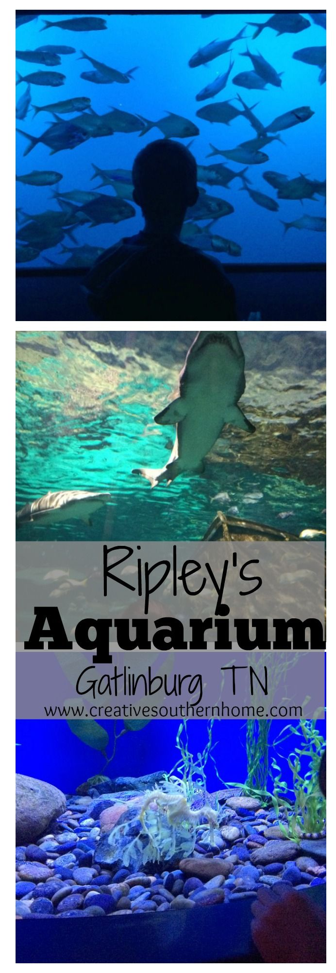 Ripley's Aquarium in Gatlinburg TN is a wonderful place to take the family to explore.  www.creativesouthernhome.com [ad]