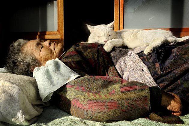 Maravillosa Historia de Amistad entre Misao y Fukumaru, una Adorable Abuela y su Gato | FuriaMag | Arts Magazine