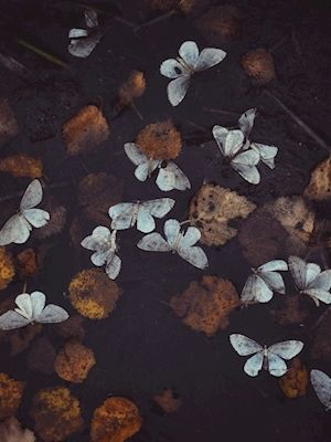 Sandra Linnell - seasonal melancholia, butterflies and leaves, photography