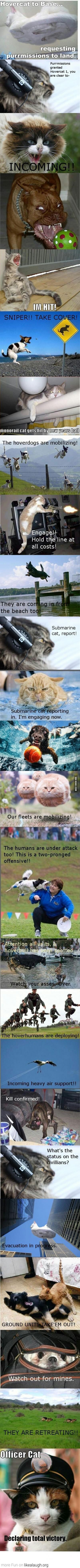 Hover cats… ATTACK!!