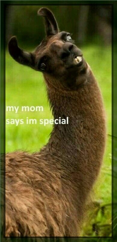 Yes u are dear llama XD