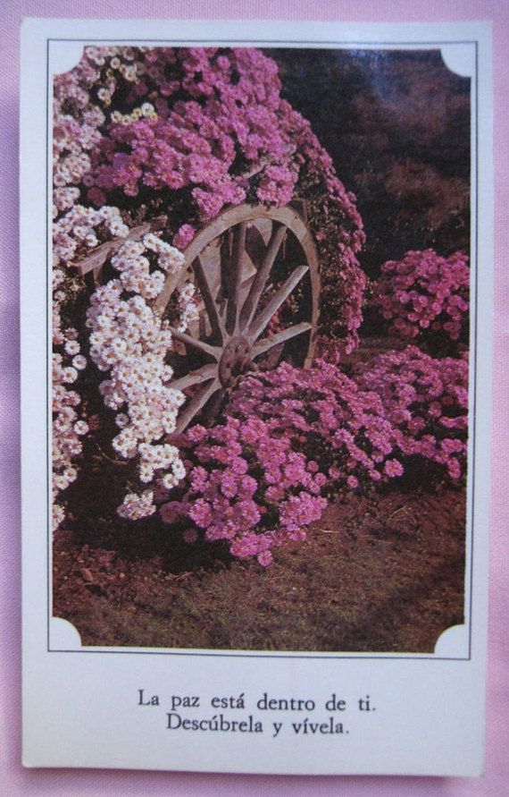 Vintage card. Postcard.Uruguay.To frame.Spanish quote.Paz.Pink