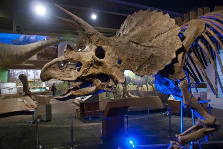 Boston Museum of Science - Triceratops.