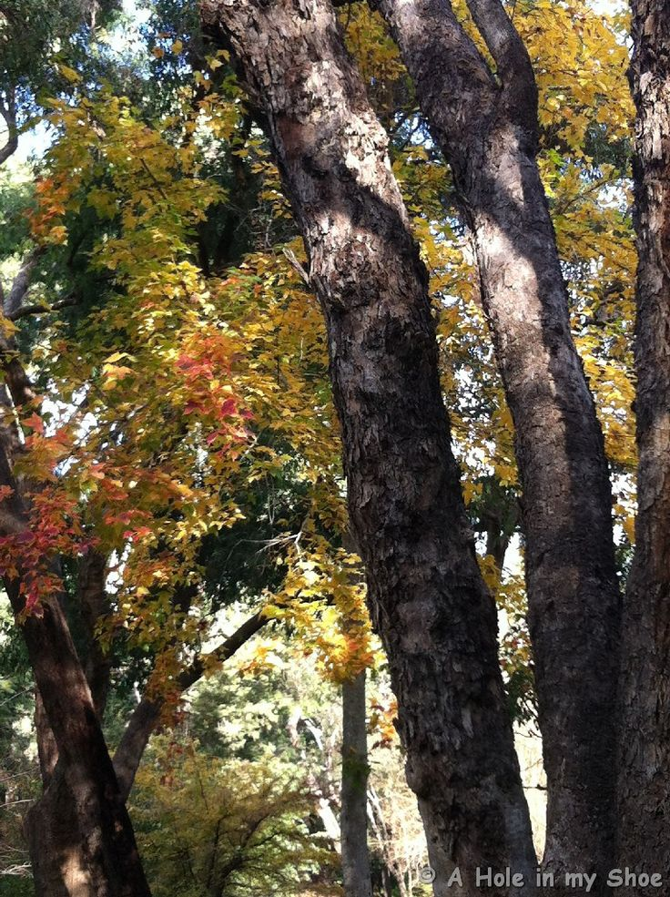 Autumn in Araluen is a very special time and a picturesque, peaceful and therapeutic place to stroll in a breathtaking setting in the Darling Ranges. http://www.aholeinmyshoe.com/autumn-in-araluen/