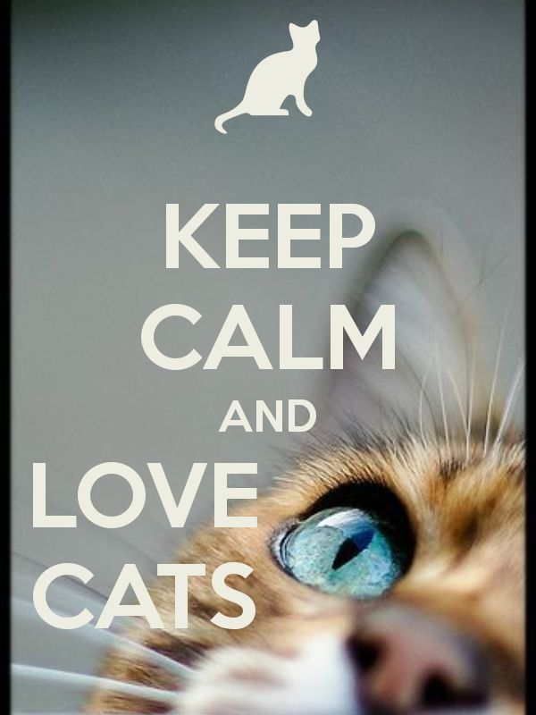 KEEP CALM AND LOVE CATS ❤ .