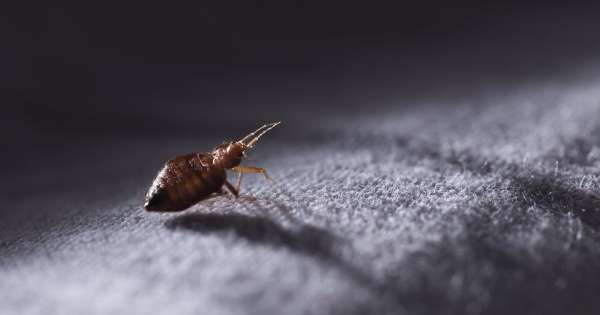 This City Has The Worst Bed Bug Infestation In America Bed Bugs