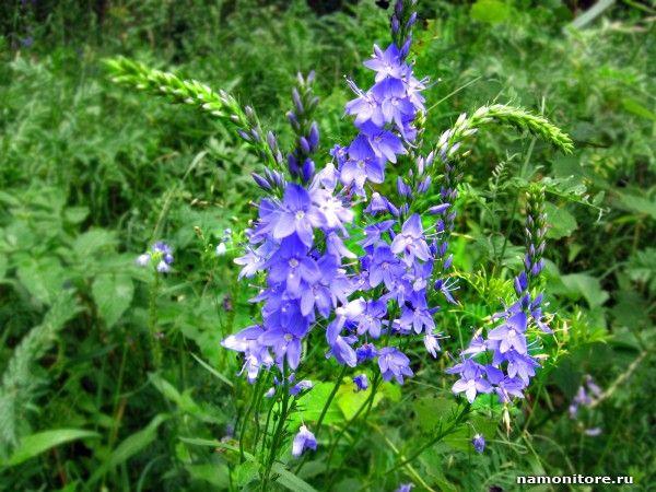 Лесные цветы, Маки - обои дня - Блог - Обои для рабочего стола