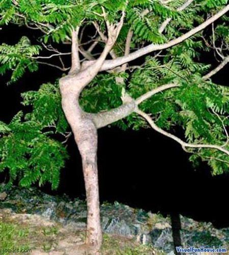 Dancing Tree Optical Illusion is a snapshot taken of an actual tree