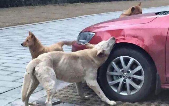 """Sabe quele dito popular """"Mexe comigo, mas não mexe com meus amigos""""? Aquele sentimento de até deixar passar algo com você, mas quando é com alguém que você ama, não mede esforços para protegê-lo ou tirar a história a limpo?  Com os animais é a mesmíssima coisa! Ainda mais quando se trata de cachorro. …"""