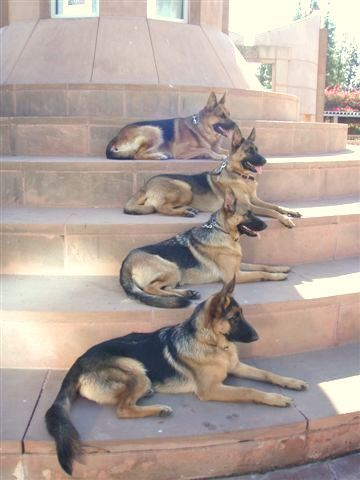 Yes please!  If I could, this is what the steps to my house would look like....not for protection, but because I ADORE ME A GERMAN SHEPARD~!