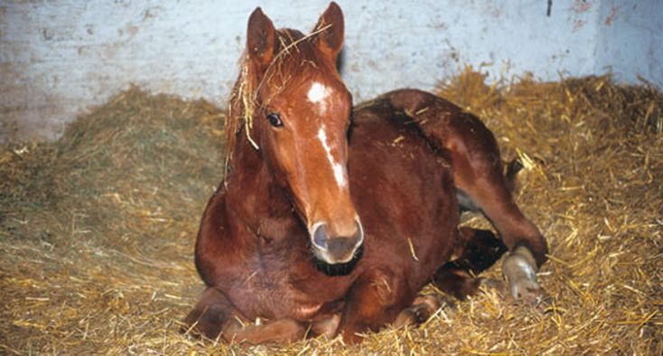 Rabies In Horse - 734×394