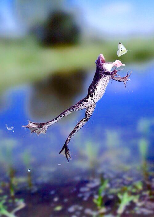 Jump, frog, jump! Catch that bug! | JUMPING JEHOSSAFAT ...