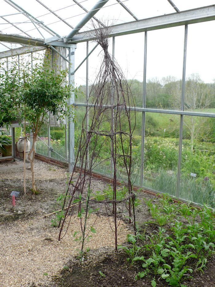 wigwam for sweet peas : willow . hazel . alder . birch ...
