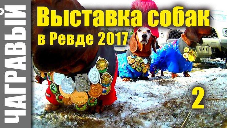 Выставка собак в Ревде 2017 |  часть 2 | ПОЛНАЯ ВЕРСИЯ| A large exhibition of hunting dogs in Russia | Part 2